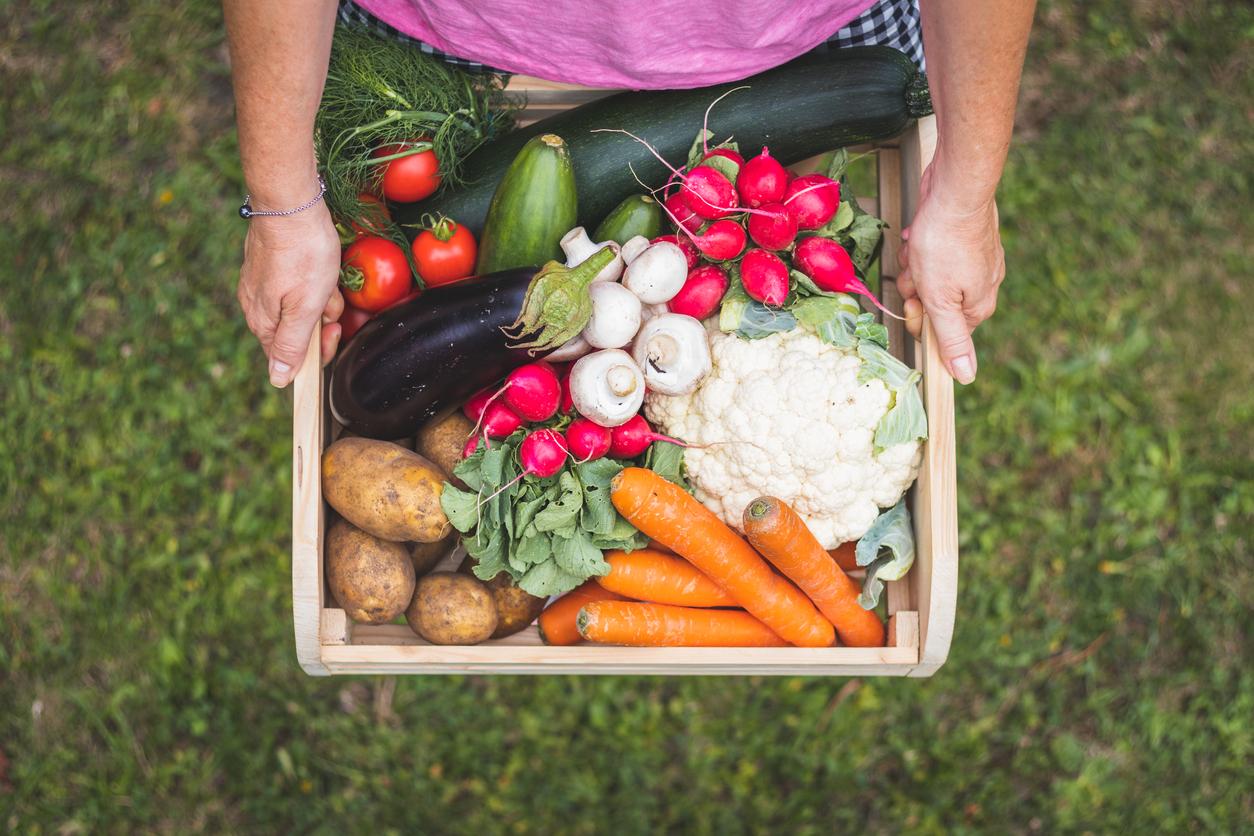 zeleninová úroda v júli
