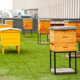 Ako chovať včely v meste