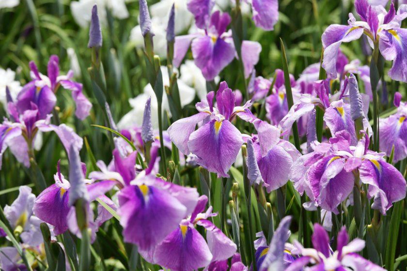 Vyberte si dekoračné rastliny, ktoré nepotrebujú veľa vody, a napriek tomu vyčarujú príjemnú atmosféru.