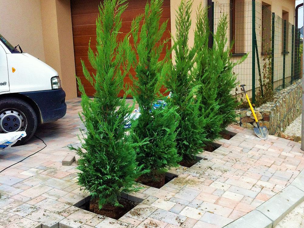 zelená stena, výsadba stromčekov