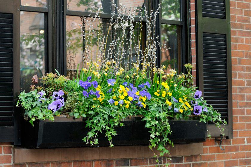 kvety na okennej rímse
