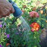zalievanie záhrady