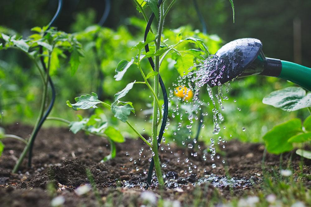 zavlažovanie rastlín