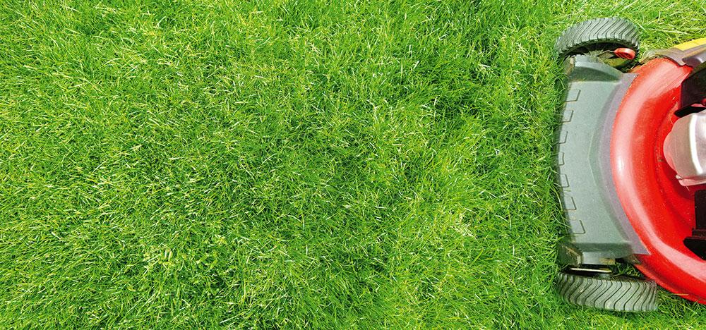 kosenie trávnika