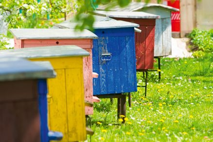 včelie úle
