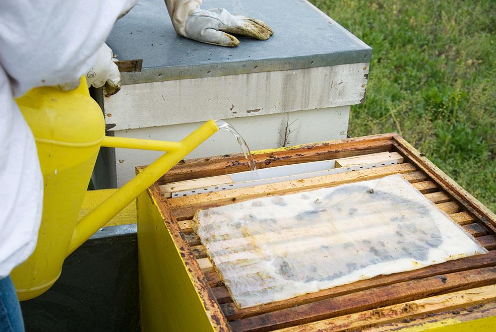zakrmovanie včiel sirupom
