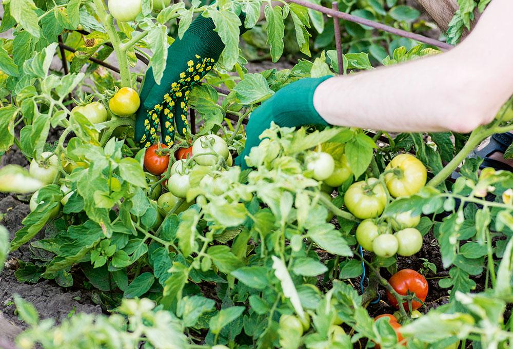 zeleninové hriadky
