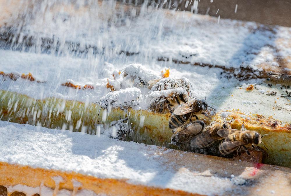posypávanie včiel práškovým cukrom