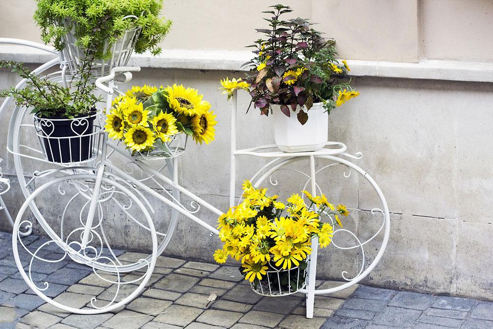 slnečnice v kvetináčoch