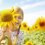 kvety slnečníc a dievčatko