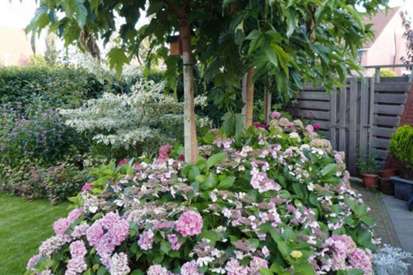 Pestovanie katalpy a hortenzie
