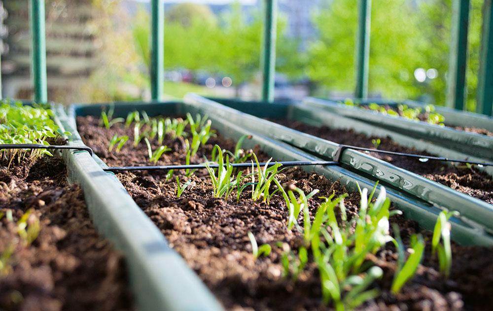pestovanie priesad v skleníku