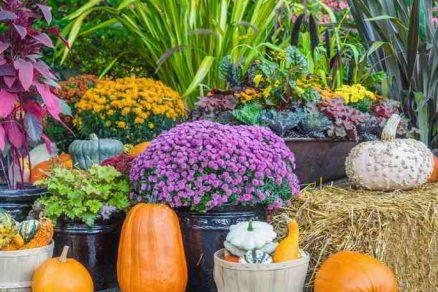 okrasné rastliny v jeseni