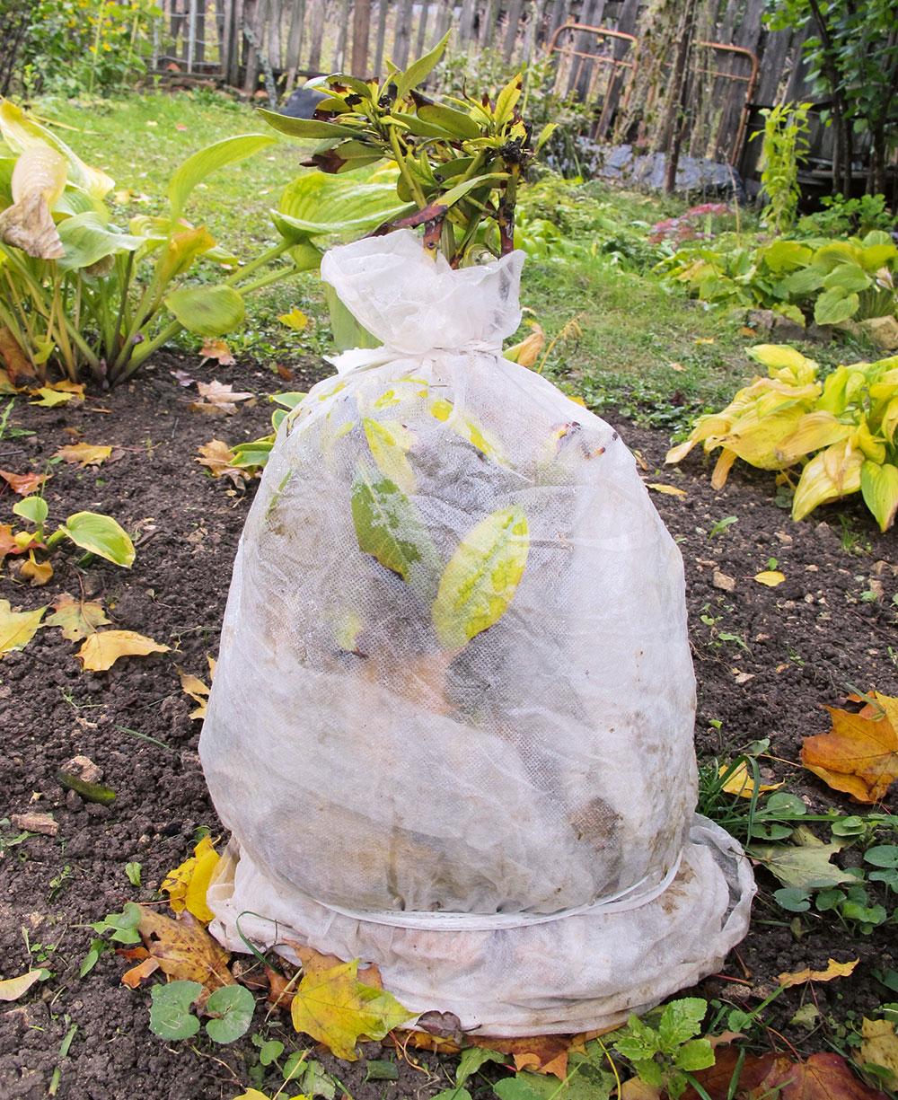 ochrana rastlín pred zimným slnkom