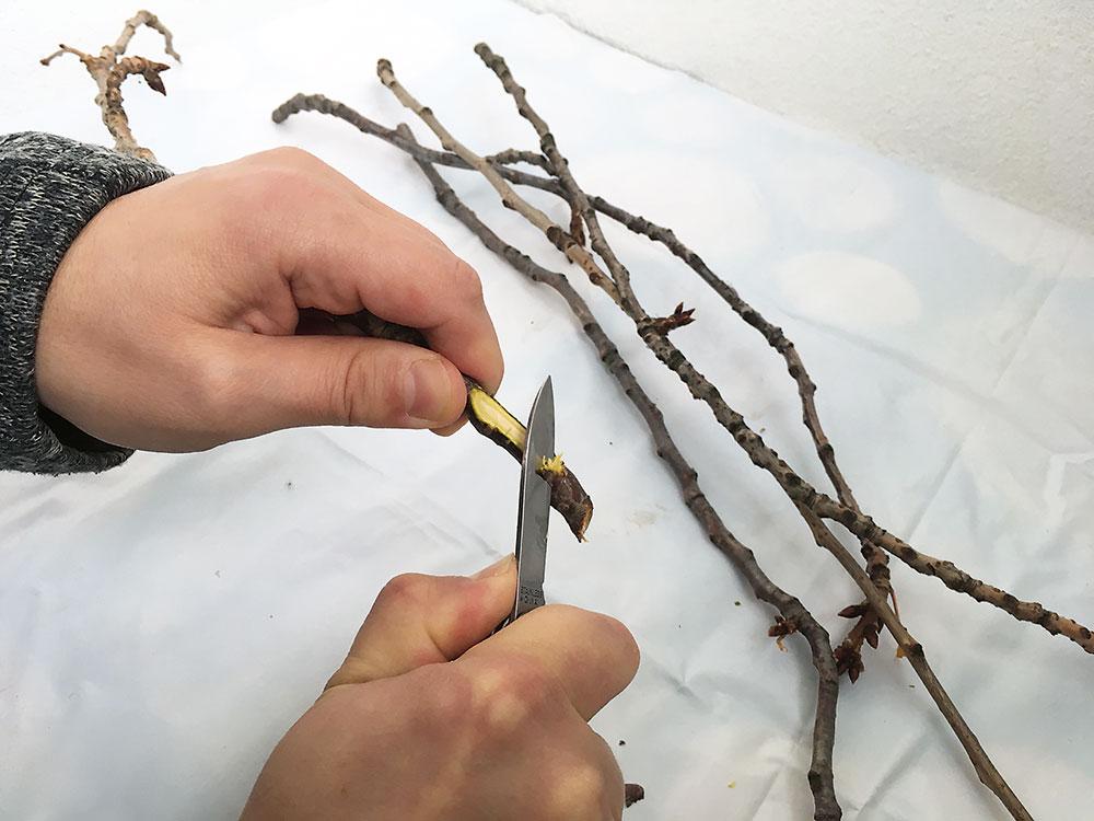 zrezanie konárikov