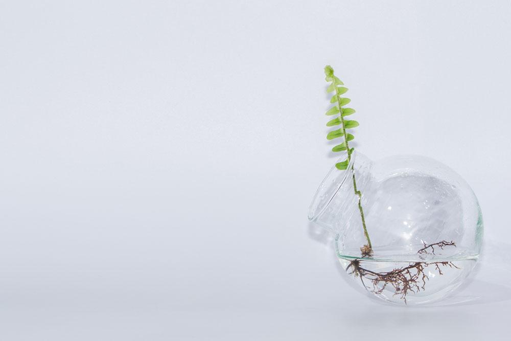 Pestovanie rastlín vo vode
