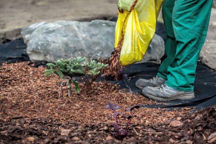 Nastielanie (mulčovanie) pôdy