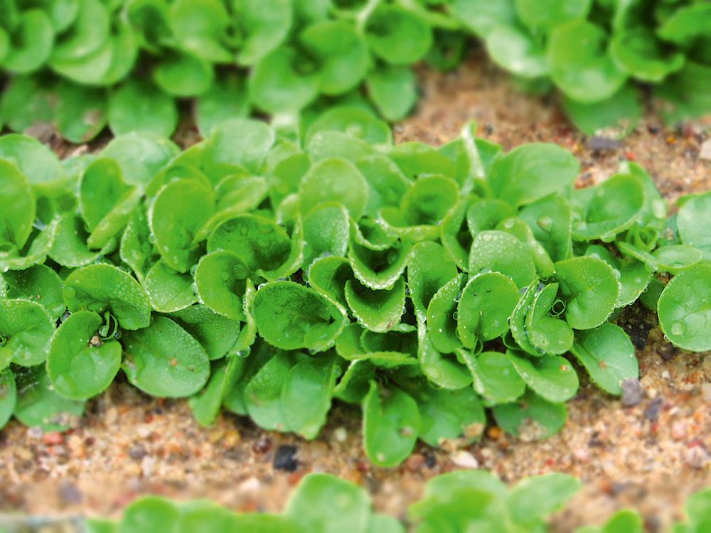 zimná zelenina