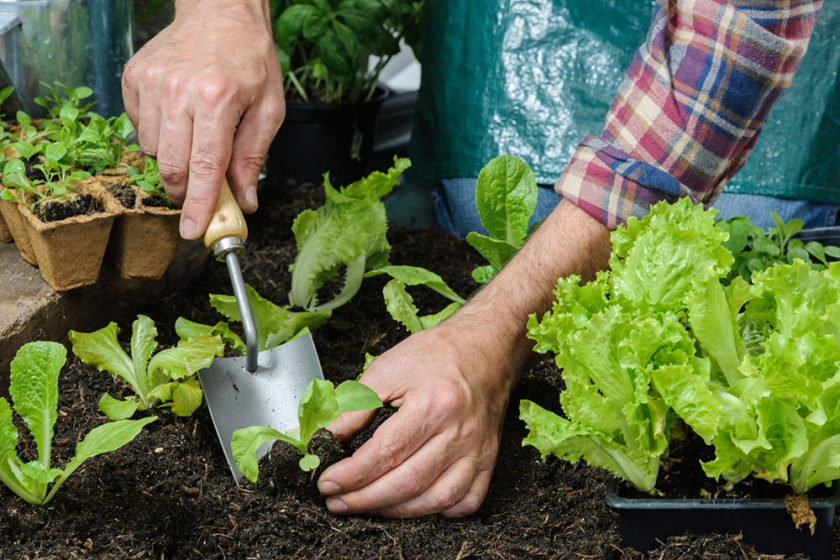 výsadba rastlín