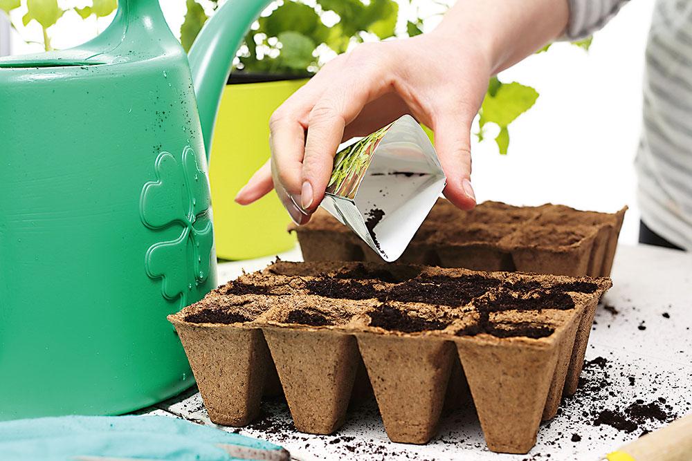 sadenie letničiek