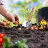 sadenie do zeme