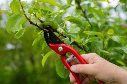 Záhradné nožnice