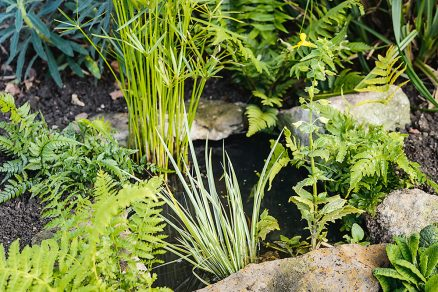 zakladanie záhradného jazierka