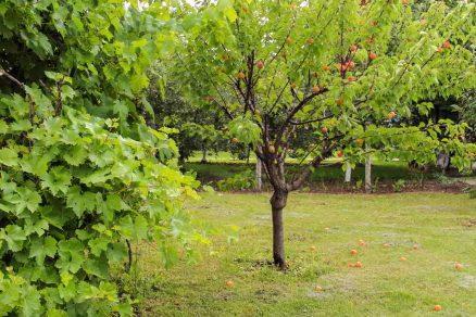 strom marhule