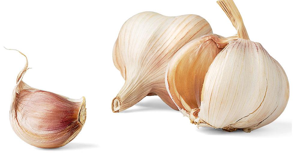 strúčik cesnaku