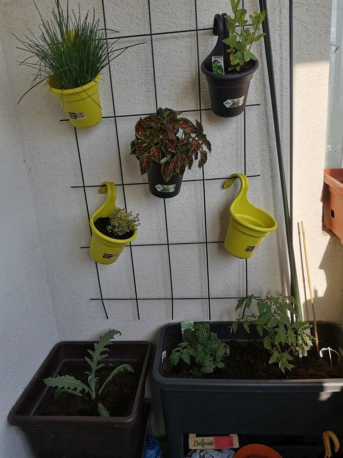 bylinková stena na balkóne