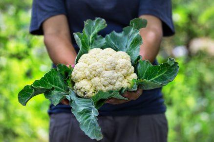 zelenina karfiol