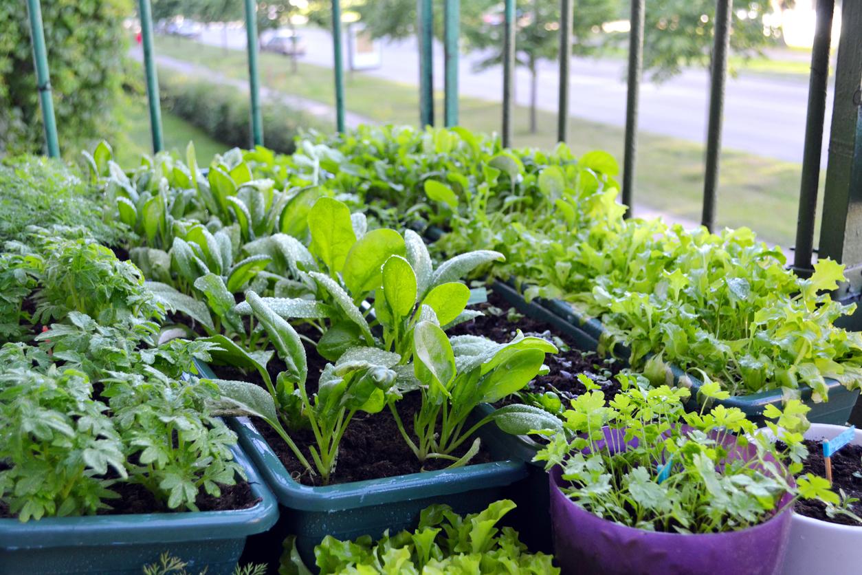 pestovanie byliniek na balkóne