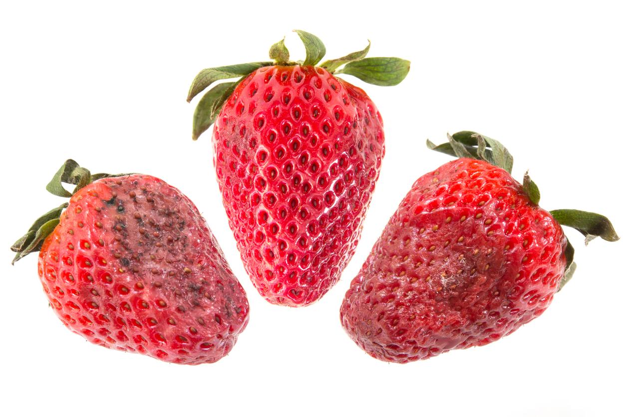 zvädnuté jahody