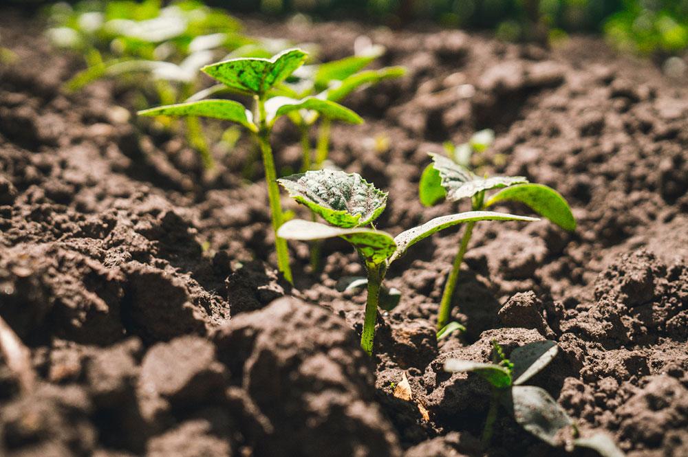 zasiatie semien tekvice