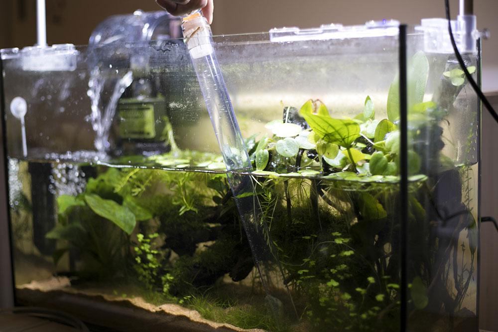 čistenie akvária