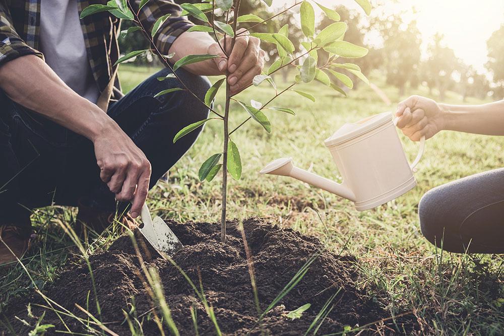 sadenie stromčeka