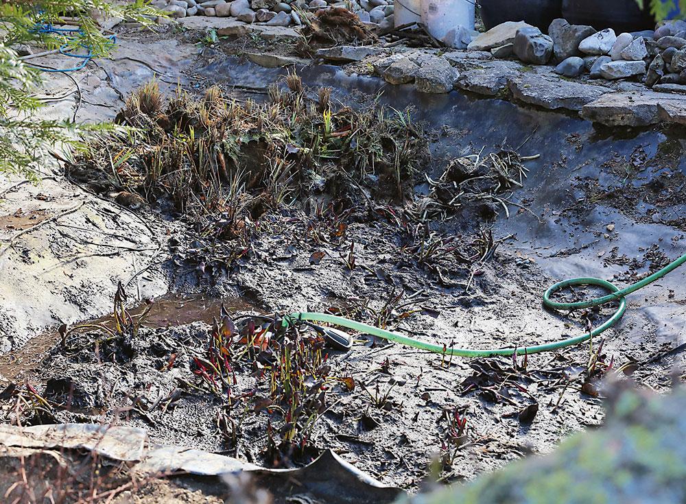 prerastené korene v záhradnom jazierku