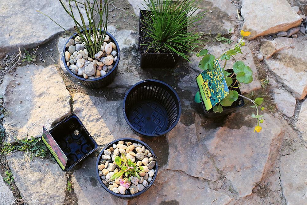 výsadba rastlín do záhradného jazierka