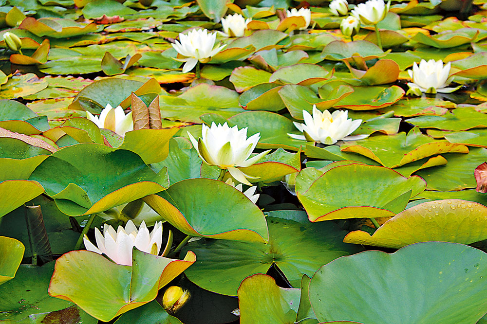 rastliny pri jazierku