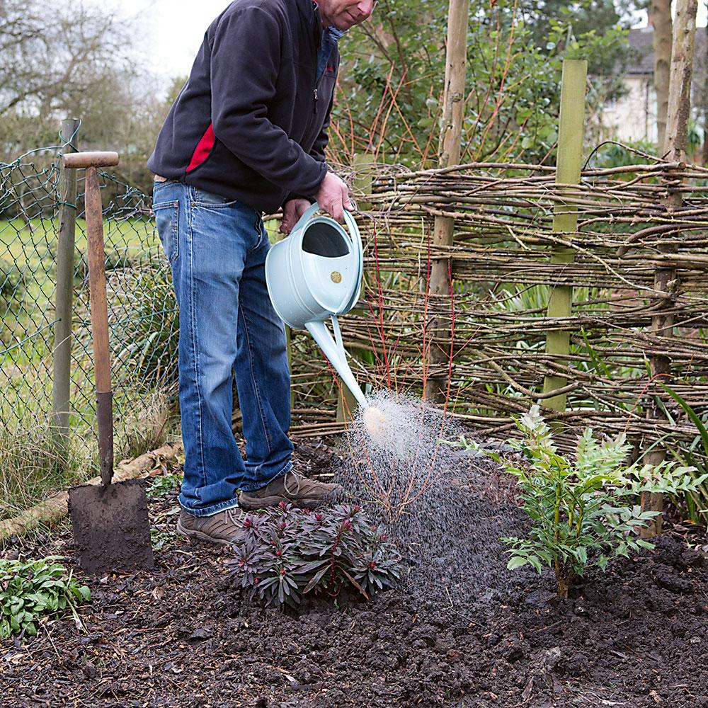 sadíme trvalky