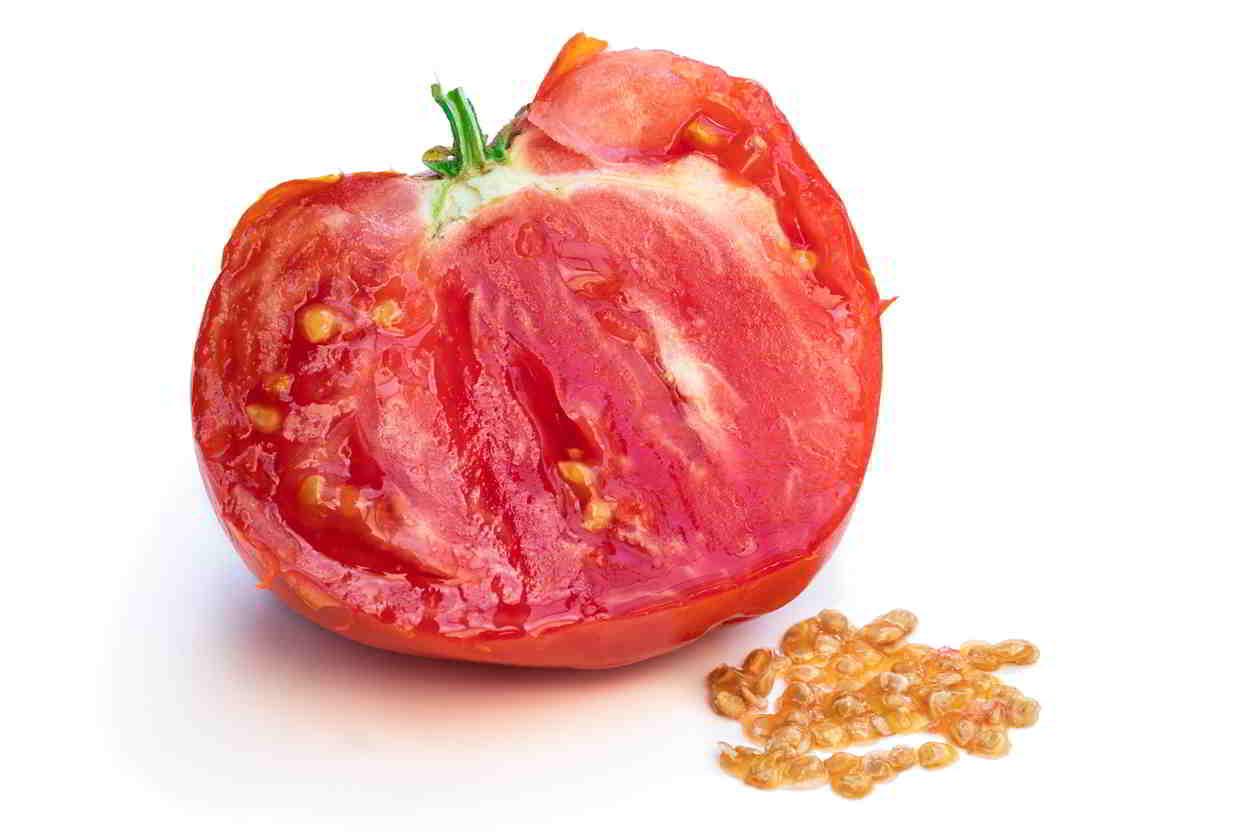 semiačka z paradajok