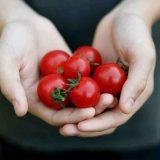 paradajky v ruke