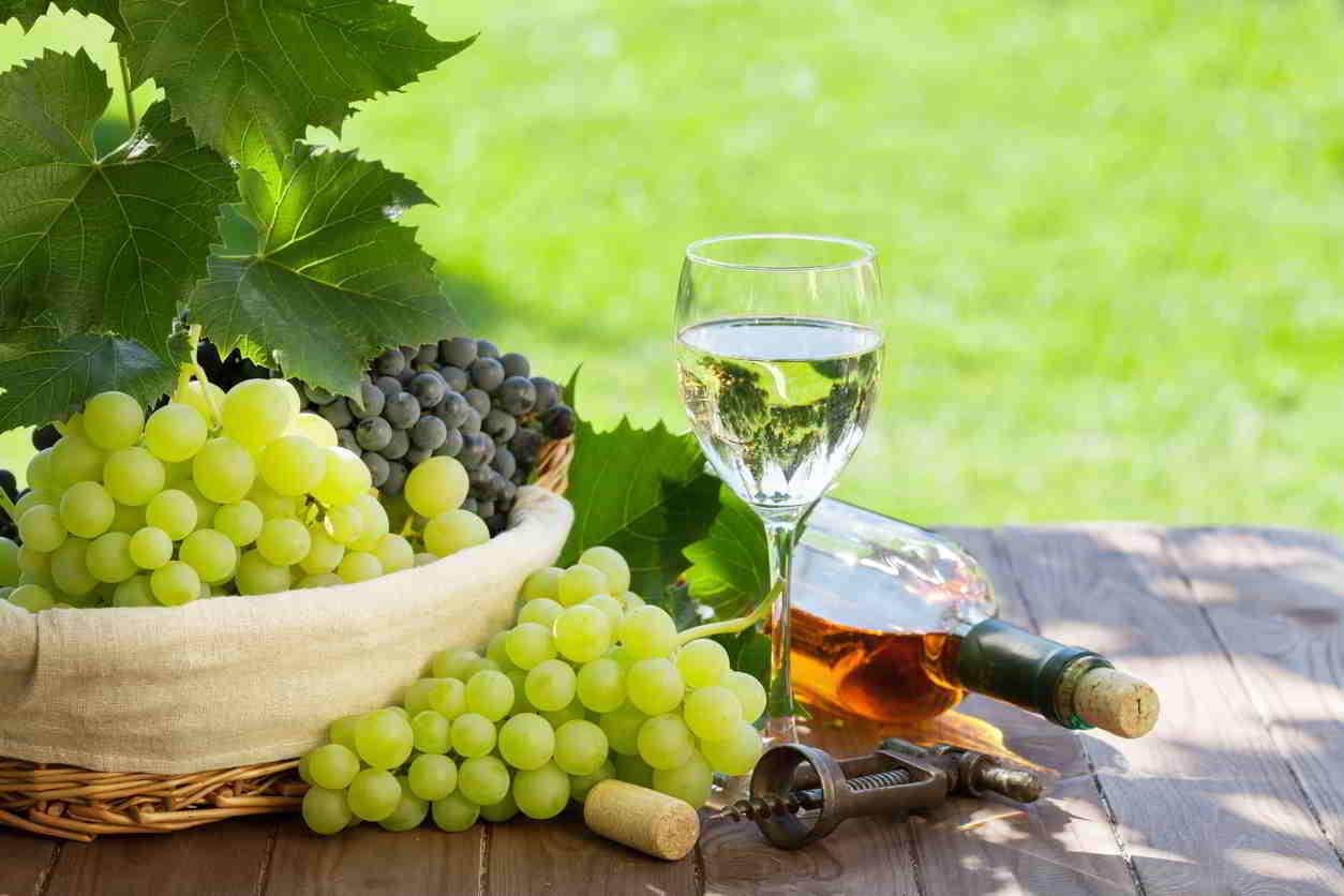 hrozno a biele víno
