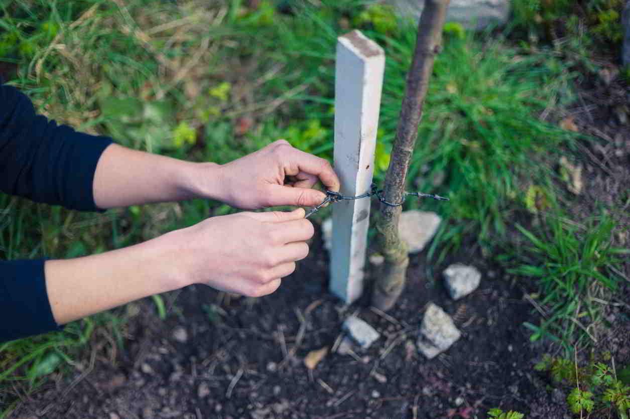 opora pre mladé stromčeky