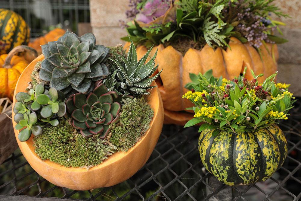 jesenná dekorácia z tekvice a sukulentov