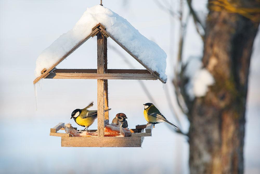 kŕmidlo pre vtáky so strieškou