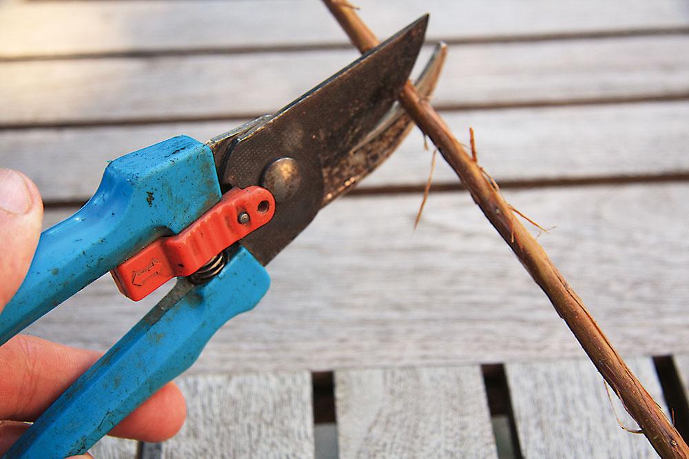 rozmnožovanie drevín