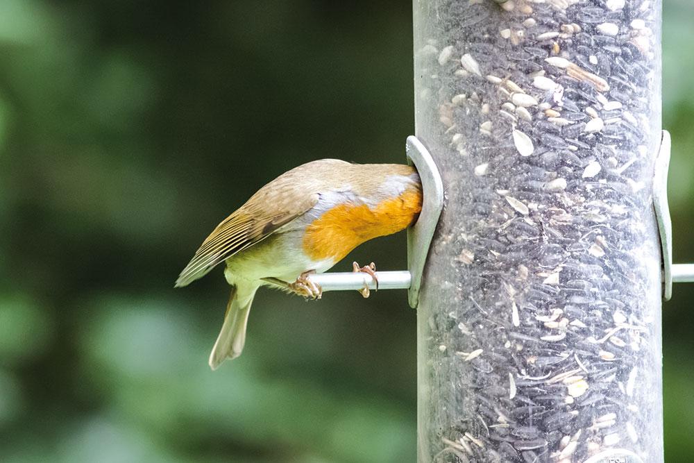 Stĺpik na kŕmenie vtákov