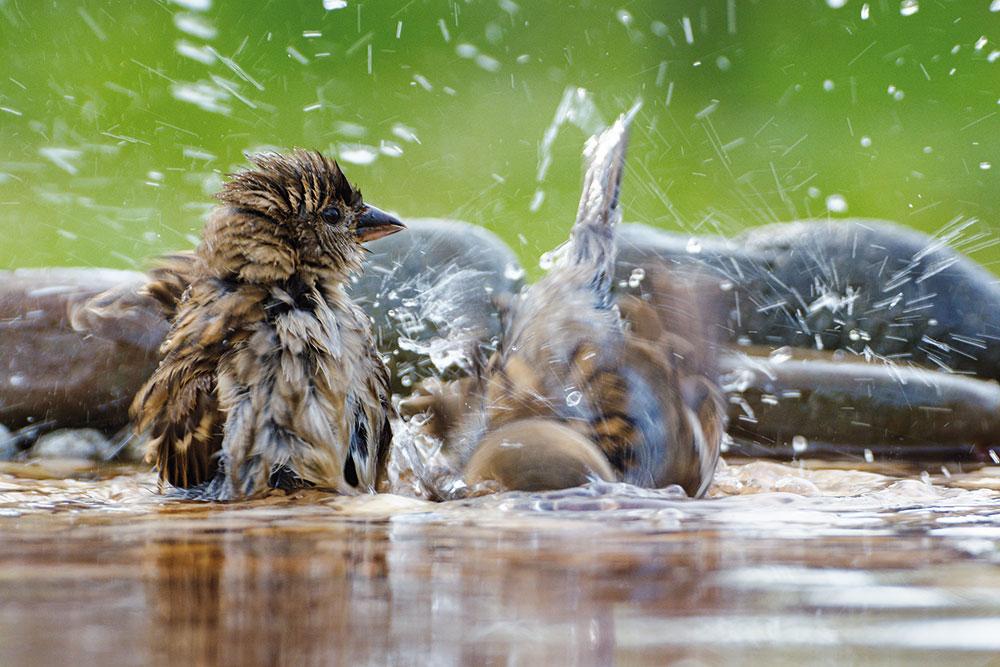 vodný kúpeľ pre vtáky