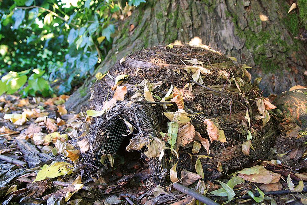 korene stromu